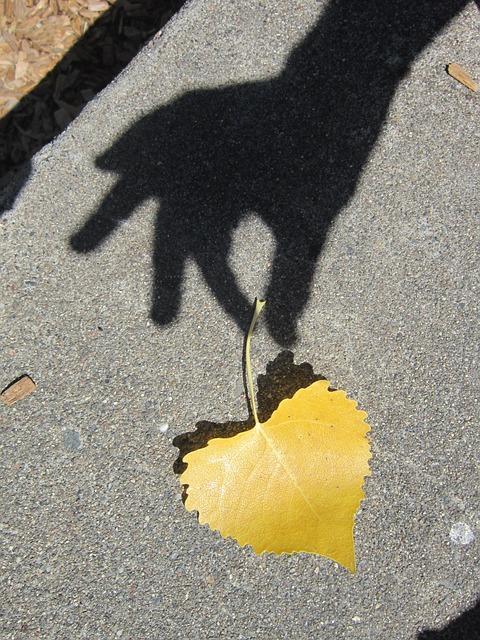 Maahan pudonnut, keltainen puunlehti, josta käden varjokuva näyttää ottavan kiinni.